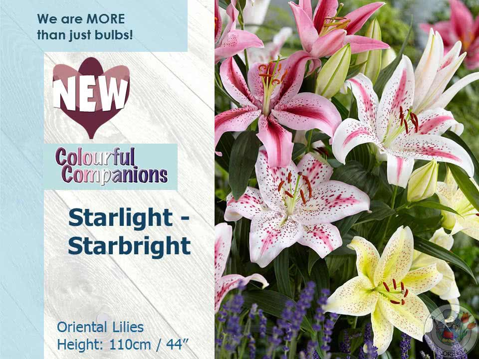 New For Spring 2018 - Colourful Companions - Starlight-Starbright
