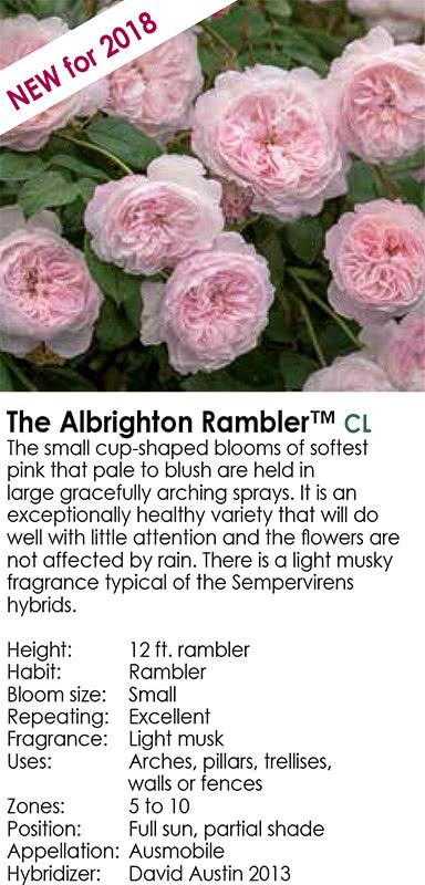the-albrighton-rambler