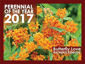 Perennial Of The Year 2017