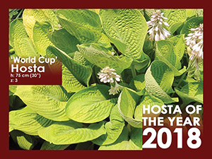 Hosta of the Year - 2018
