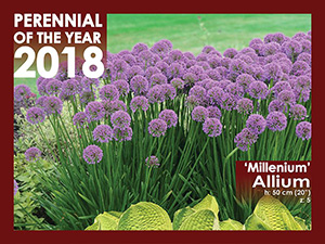 Perennial of the Year - 2018