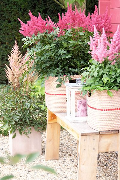 Outdoor Potted Garden on Wood Furniture