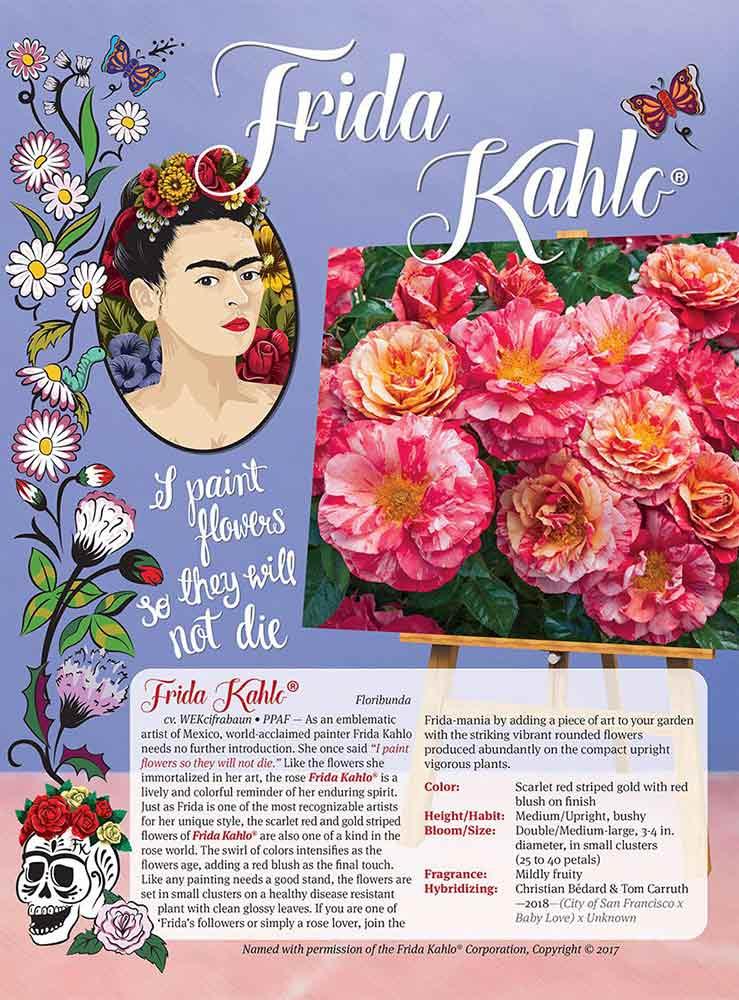Weeks Roses - Frida Kahlo