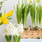 Easter Living Arrangements - Hero Image