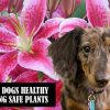 Canines Plants - Luna - Safe Plants for Dogs