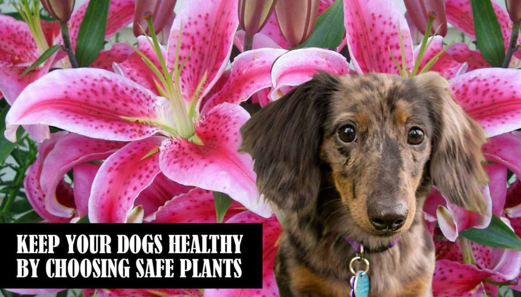 Canines Plants - Luna - Safe Plants for Dogs