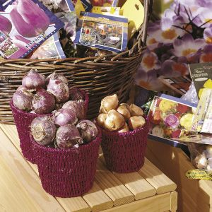 Springflowering dry bulbs display retail iBulb_16960