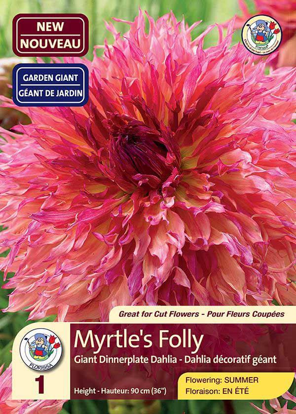 Dahlia Myrtle's Folly - Giant Dinnerplate Dahlia - Flowering in Summer