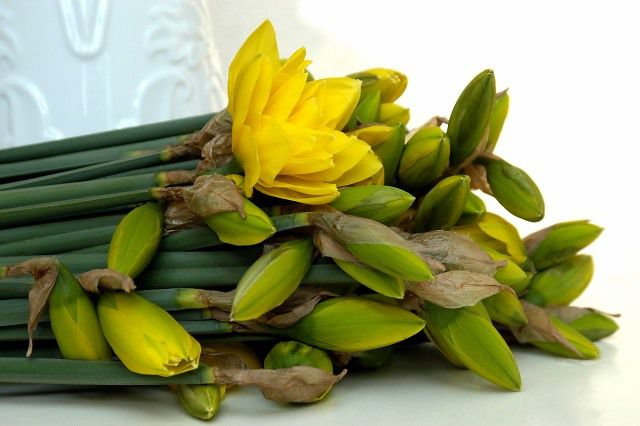 Cut Daffodils - Narcissus