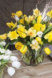 Beautiful Daffodil Vase Arrangement