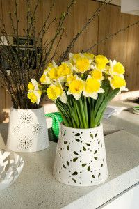 Cut Daffodils in Vase
