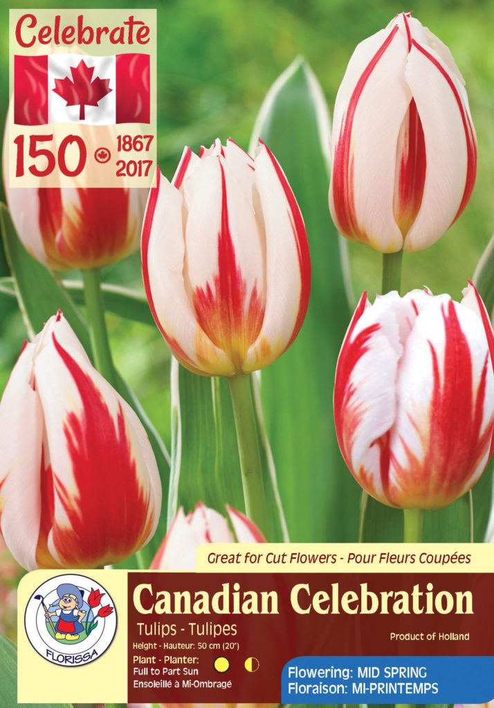 Canadian Celebration - Tulips -Flowering in Mid Spring