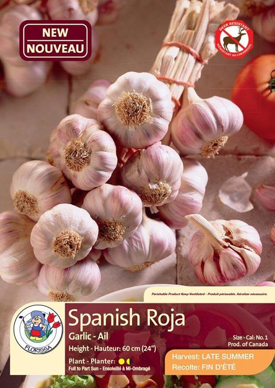 Spanish Roja - Garlic - Harvest in Late Summer