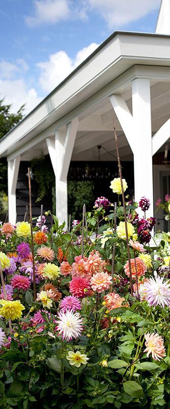 Dahlia Summer Garden - Pinterest