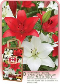 True North Lilies - 12 Asiatic Bulbs - Flowering in Early Summer