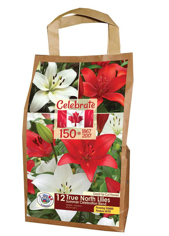 True North Lilies - Summer Celebration Blend - Flowering in Summer