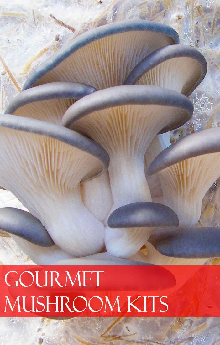 Gourmet Mushroom Kits | Florissa | Flowers, Roses, Fruits