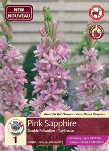 Pink Sapphire - Double Polianthes - Flowering in Late Spring