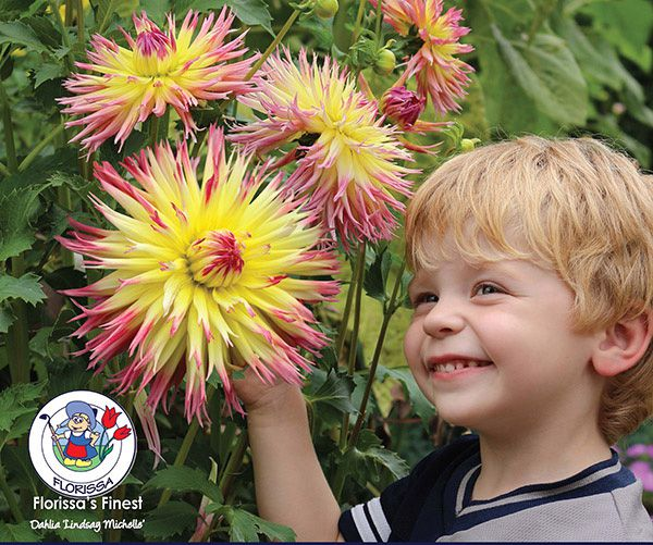 Logan Lindsay Michelle - Start Growing Dahlias