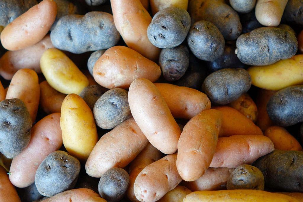 Potato Gourmet Mix