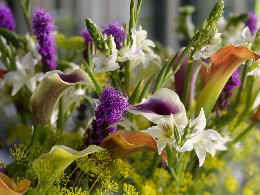 Sfeervol - Summer Flowering Bulbs
