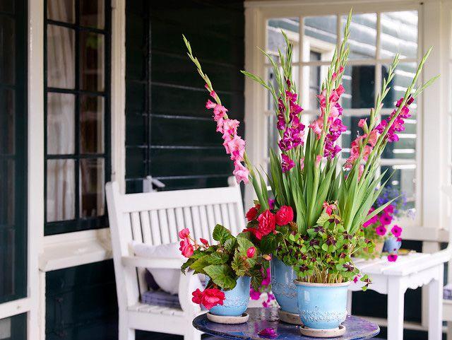 Summer Cut Gladiolus Flowers