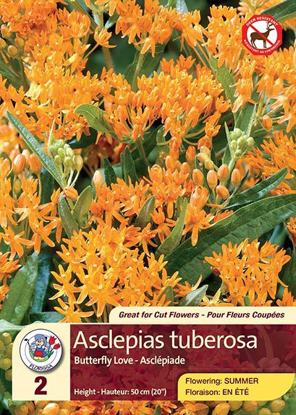 Asclepias Tuberosa - Butterfly Love - Flowering in Summer