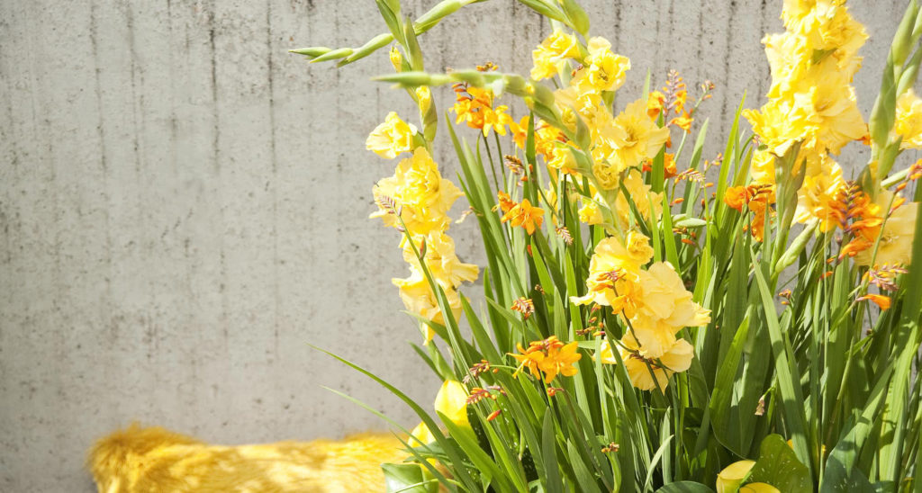 Gladiolus Combine with Crocosmia and Calla Lilies in a Summer Sun Container