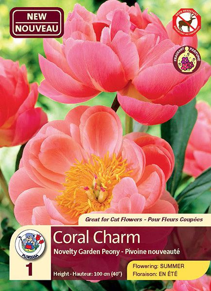 Coral Charm - Novelty Garden Peony - Flowering in Summer