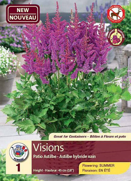 Visions - Patio Astilbe - Fragrant and Deer-Resistant Flowering in Summer