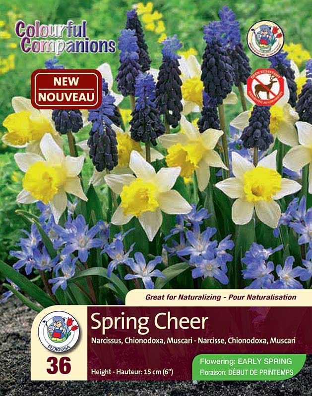 Spring Cheer - Colourful Companions - Narcissus, Chinodoxa, Muscari - Flowering in Early Spring
