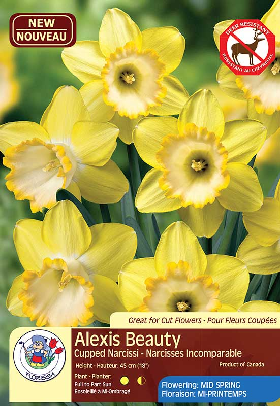 Alexis Beauty - Cupped Narcissi - Deer Resistant Bulb - Flowering Mid Spring
