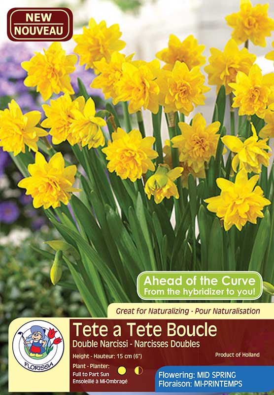 Narcissus Tete a Tete Boucle - Double Narcissi - Deer Resistant - Flowering Mid Spring