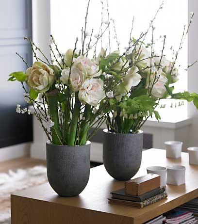 Amaryllis Cut in Vase