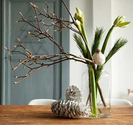 Amaryllis Decor