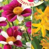 Feed the Pollinators Blend - Cover
