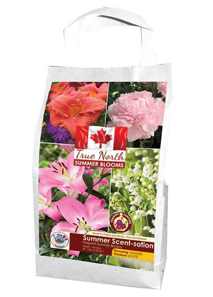 True North - Summer Blooms - Summber Scent-sation - Flowering in Summer