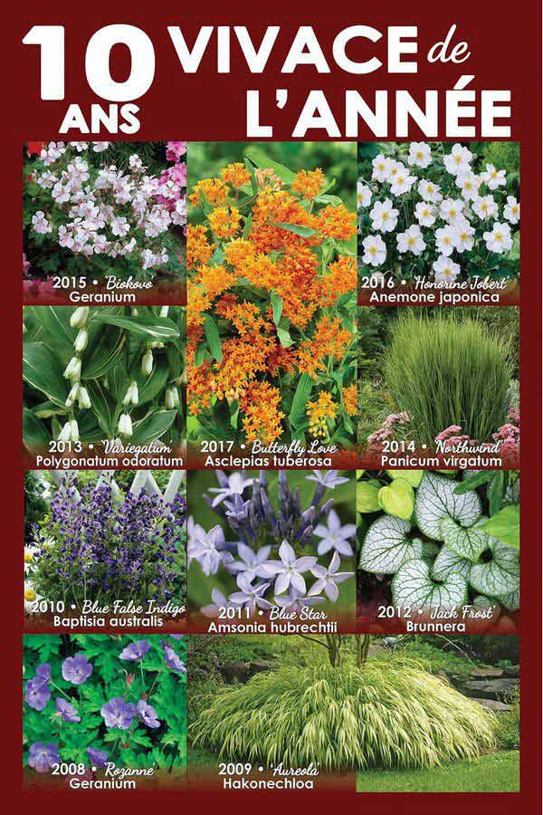 10 Years of Perennial of the Year