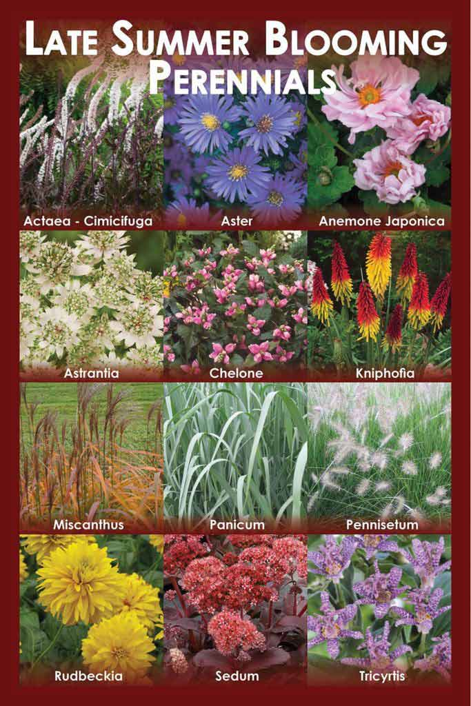 Perennial Garden Solutions Florissa Flowers Roses And More