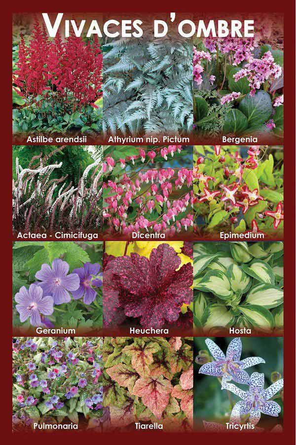 Perennials for Shade