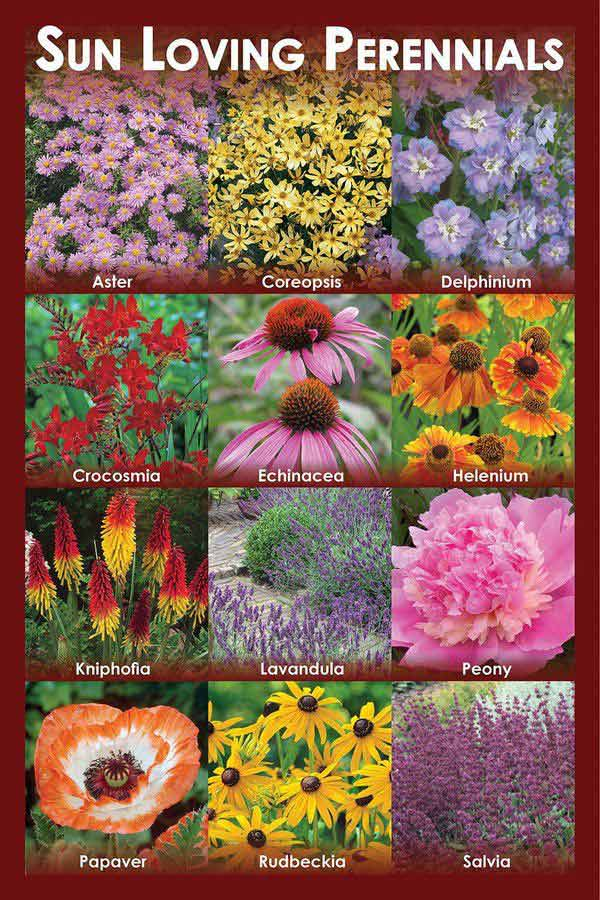 Sun loving perennials florissa flowers roses fruits - Sun garden manufactured home community ...