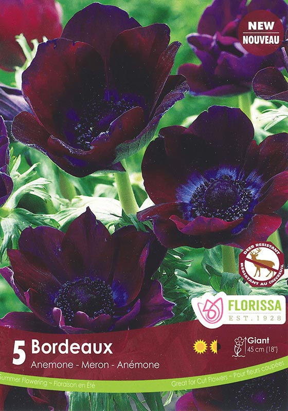 New for Spring - Bordeaux - Anemone - Deer Resistant