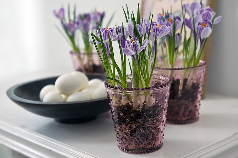 Easter Living Arrangements - 03