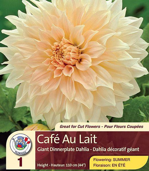 Café au Lait – Dinner Plate Dahlia