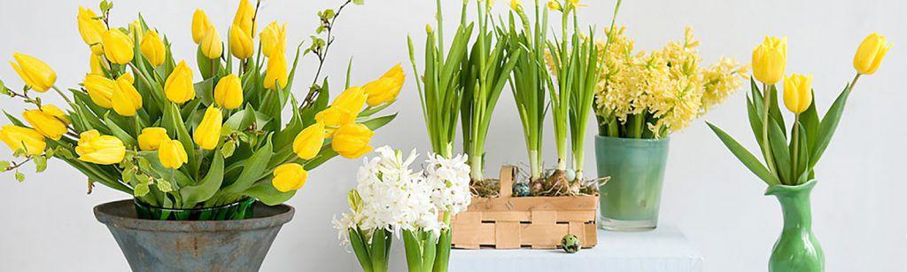 Easter Living Arrangements - Hero Image