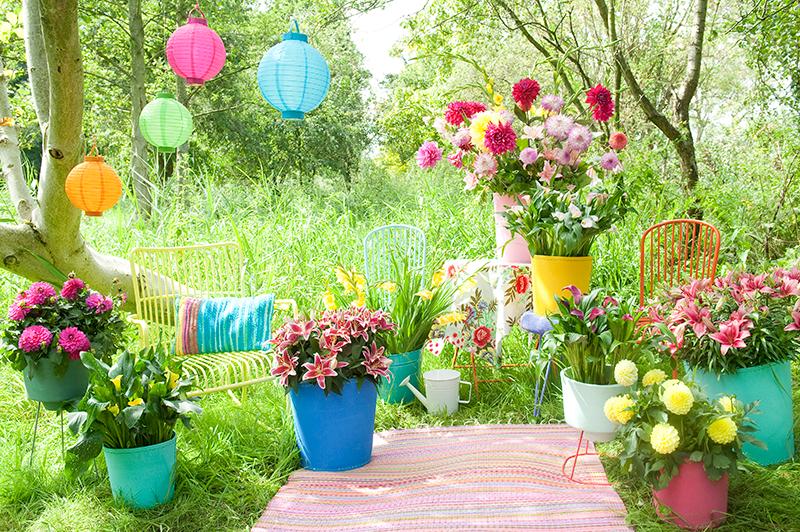 Get Growing - Summer Flowering Bulbs