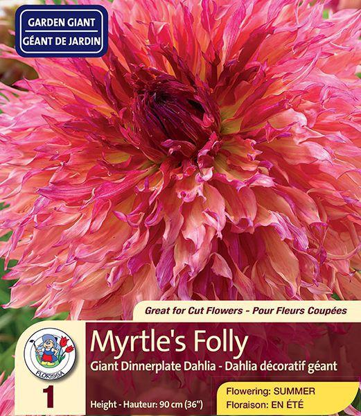 Myrtle's Folly – Dinner Plate Dahlia