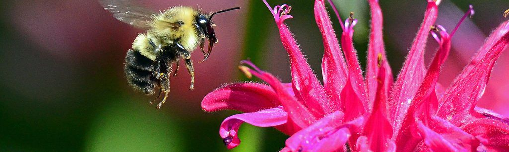Feeding the Pollinators - Feature
