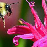 Feeding the Pollinators - Feature