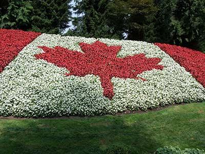 Canada Flag Flowers